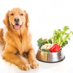 What's Expedient About Natural Commercial Dog Food?
