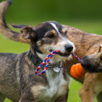 Looking For Dog Daycare Facility In NJ? Check These Tips!