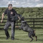 Guard Dog Training: All you Need to Know