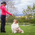 Tips for Picking a Good Dog Training Facility