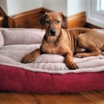 Some Important Facts about Dog Beds
