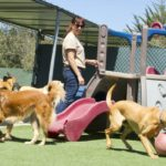 5 Reasons To Keep Your Dog In A Daycare