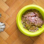 The Best Diet for Dogs Suffering from Cancer