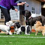 Things You Need To Consider When You Plan To Open A Doggie Day Care