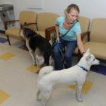 How Good Pet Care Keeps The Vet Away