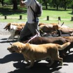 The Benefits of Dog Day care services