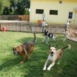 Choosing A best Dog Day Care Services